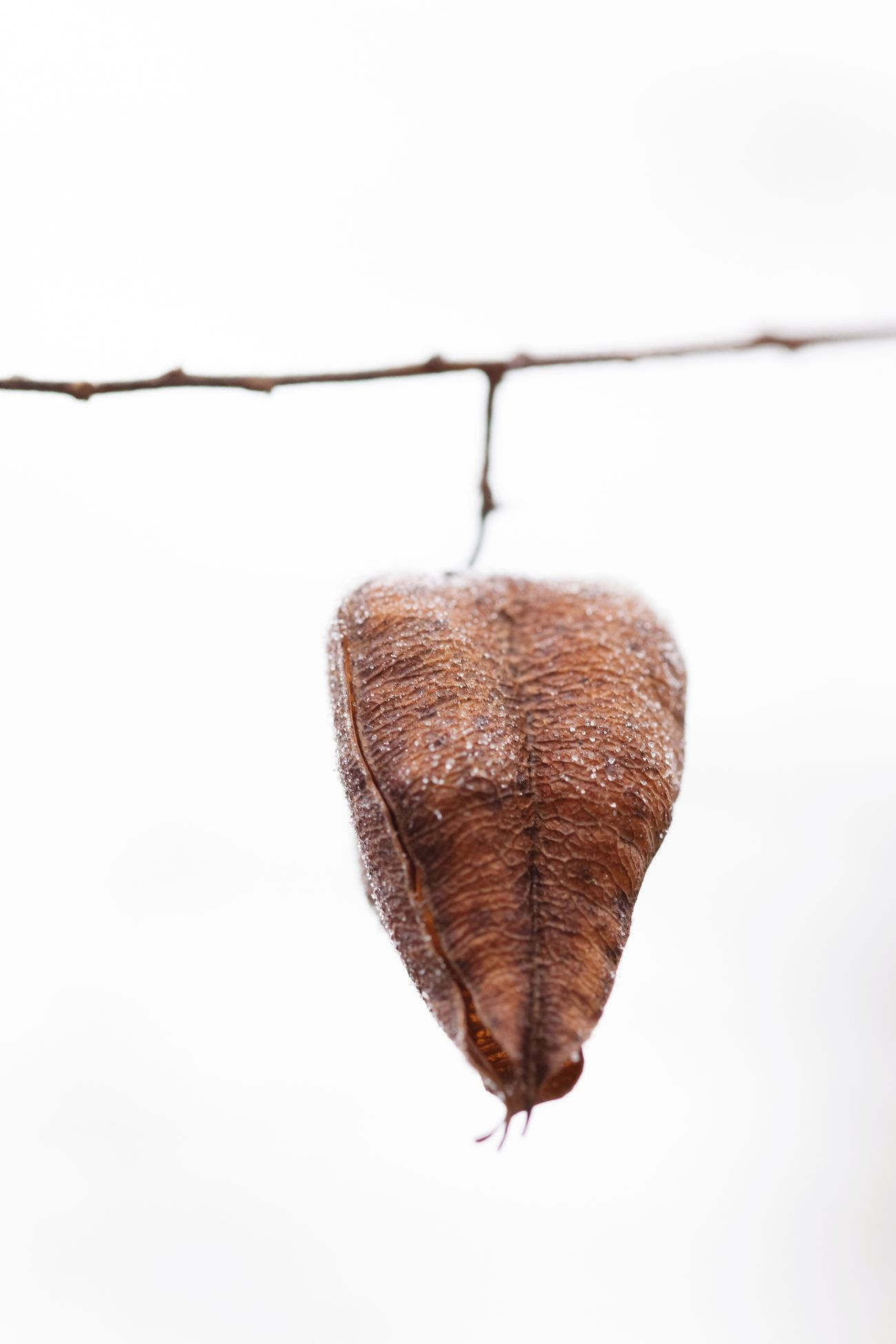 ❤️ Hanging Heart Showcase: February Nature On Your Doorstep EyeEm Nature Lover EyeEm Gallery EyeEm Best Shots - Nature Nature_collection I LOVE PHOTOGRAPHY Malephotographerofthemonth Only Nature Close-up Dof Simple Quiet Love Fineart Eye4photography  Macro Germany Nature's Diversities Purity Full Frame Tree_collection  TreePorn Plants And Flowers Winter