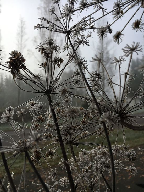 Growth Nature Plant No People Tree Beauty In Nature Tranquility Flower Day Outdoors Fragility Close-up Sky Freshness autumn misty morning