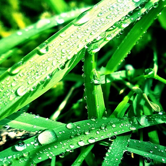 🎶Raintrops keeps falling.....🎵 Hello World Raindrops Greengrass Tau Tautropfen Gras  Lebensraum Nature Natur Bee Beekeeping Bienen  Imker Lotus