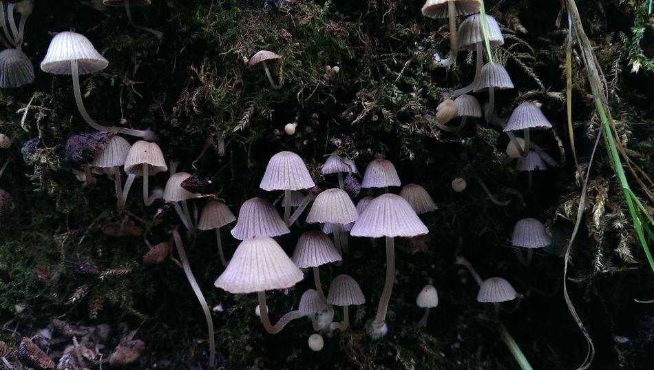 No Edit/no Filter Tadaa Community Mushroom Kingdom Nature Mushrooms Fungus Amungus Fungus Fungus,Fungi Beauty In Nature Delicate
