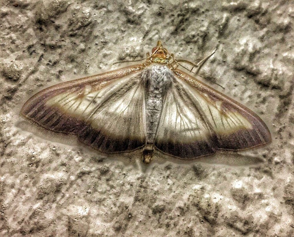 One Animal Animal Themes Insect Animals In The Wild Wildlife Butterfly Close-up Nature Animal Wing Zoology Outdoors Day No People
