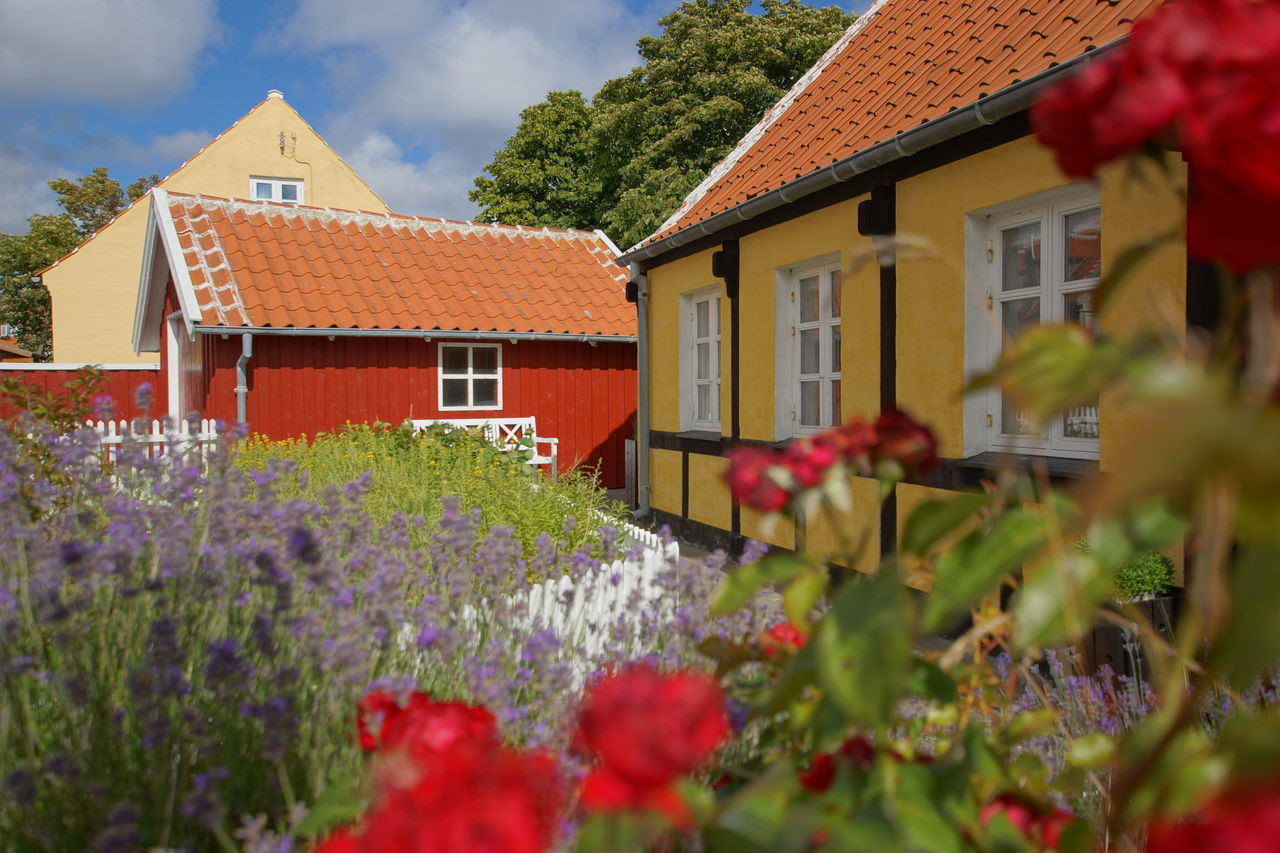 Typical little Danish houses in Skagen Architecture Beautiful Building Exterior Built Structure City Danish Day Denmark Flower Garden Half-timbered Half-timbered Houses House Houses No People Outdoors Picturesque Picturesque Village Plant Pleasant Skagen Summer Sunny Afternoon Typical Wooden House