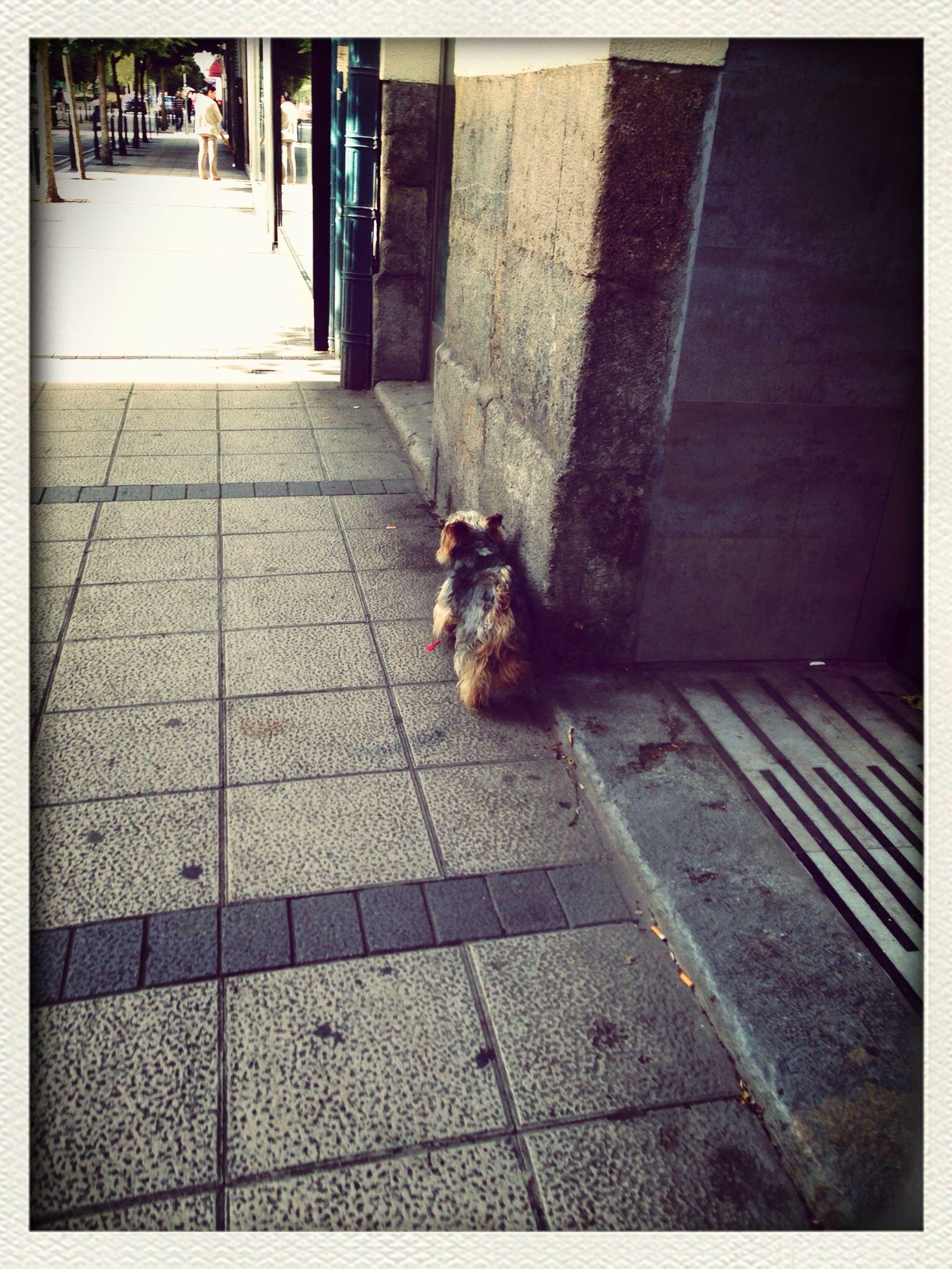 animal themes, transfer print, one animal, pets, auto post production filter, domestic animals, mammal, paving stone, cobblestone, high angle view, dog, sunlight, footpath, sidewalk, full length, day, outdoors, street, sitting, wildlife