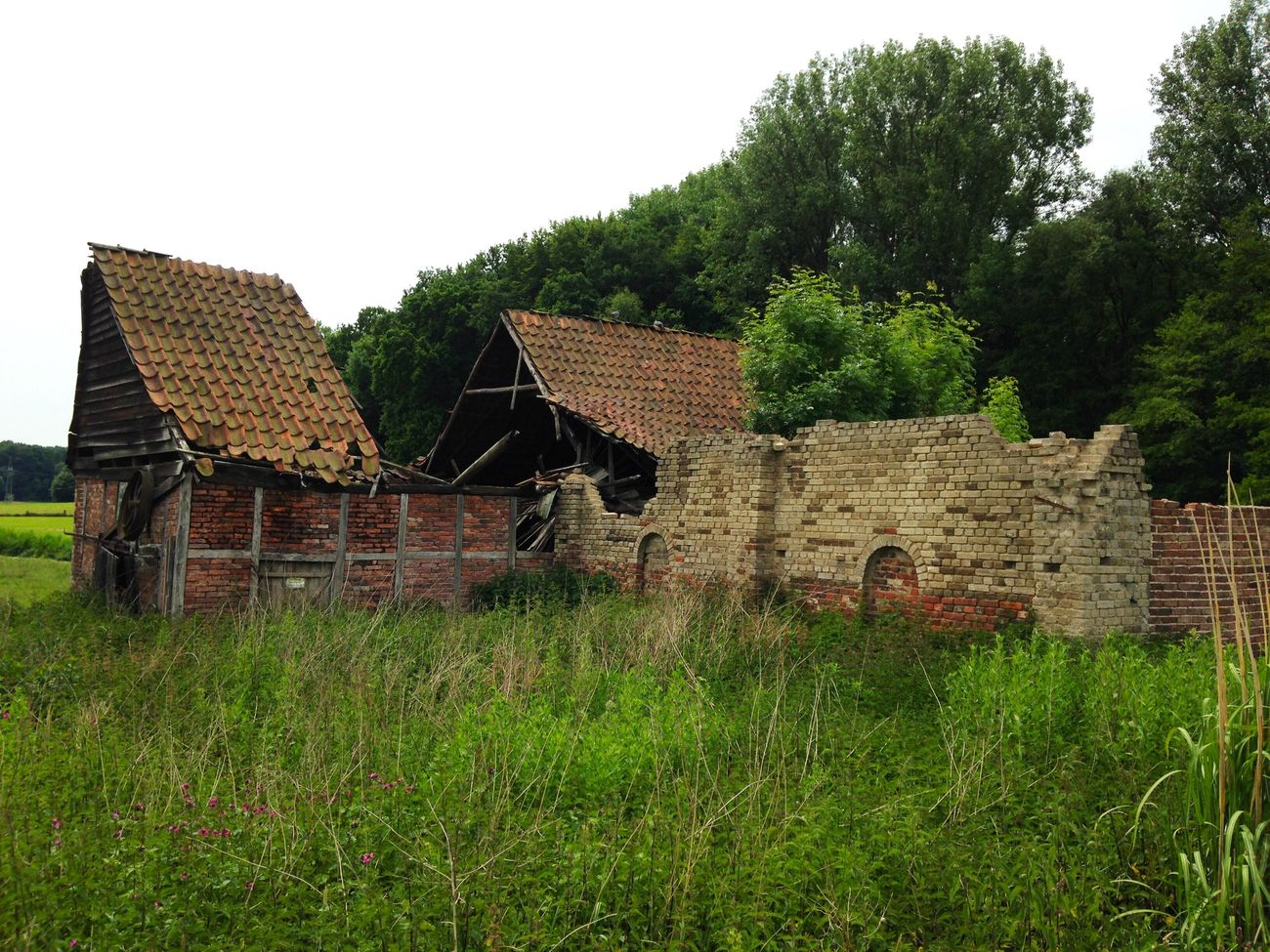 Built Structure Building Exterior House Architecture Tree No People Grass Roof Green Color Clear Sky Nature Sky Outdoors Day Barn Country House Derelict Bruchbude Haus Verfall Ruin Ruine Ruined Building Green Old Buildings