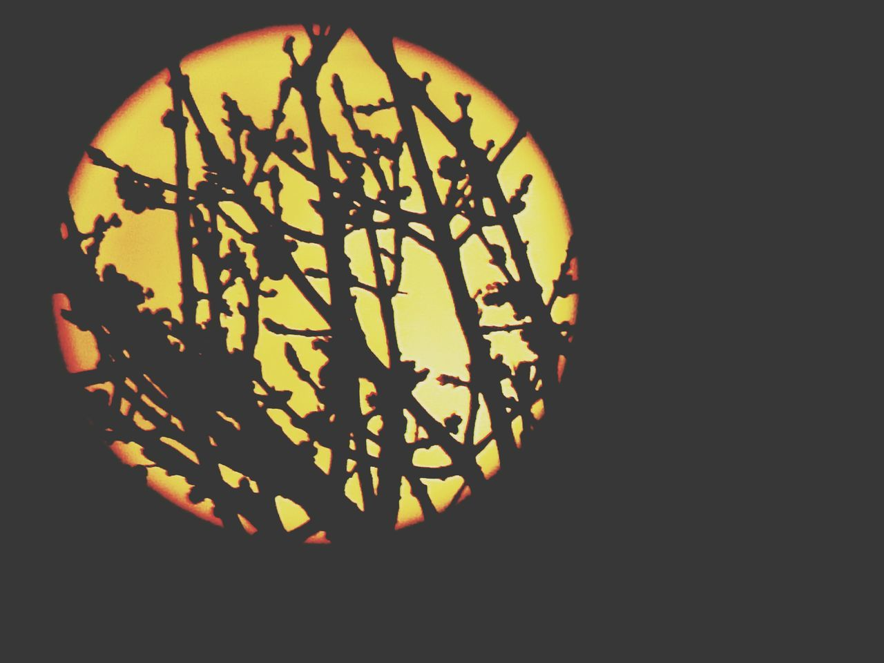 No People Orange Color Sunset Silhouette Nature Outdoors Sky Close-up Night
