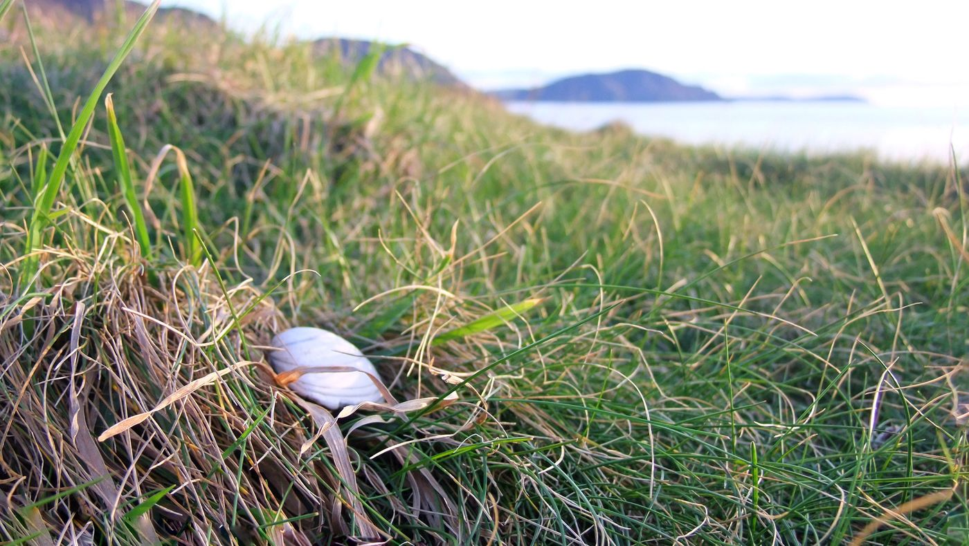 A little treasure wediscovered while we were playing around on a lazy Sunday afternoon. Shell Share Your Adventure Grass The Great Outdoors - 2016 EyeEm Awards Layers Selective Focus EyeEm Nature Lover Majestic Treasure Discovering Nature Showcase: March Outdoors No People Non-urban Scene Landscape Nature_collection Deceptively Simple Landscape_Collection The Adventure Handbook Isle Of Man Landscapes With WhiteWall Memories Adventure Buddies Hidden