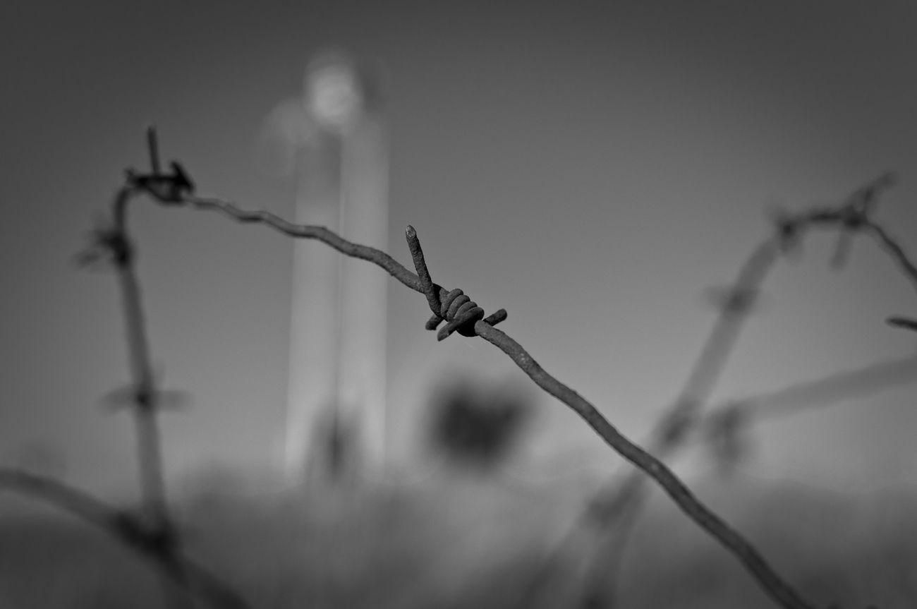 Blur for the Bnw_friday_eyeemchallenge Bw_collection Blackandwhite Monochrome