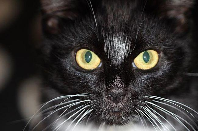 Cat BLackCat Photography Catnip Home Cats Catsofinstagram Catnip looking trill