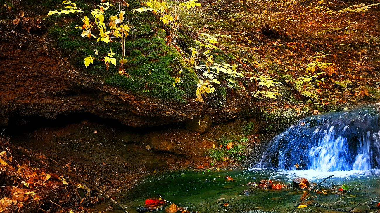 Autumn Beauty In Nature Day Fall Nature No People Outdoors Plant Poland Rock - Object Scenics Tree Water