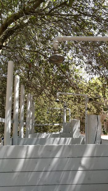 Shower Shower Time Nature Tree ShowerTime