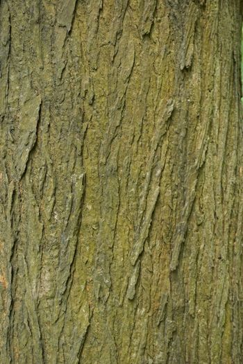Full frame shot of textured tree trunk. (Res: 6000*4000, Sony ILCE6000) Backgrounds Bark Brown Cracked Detail Natural Pattern Pattern Pattern Design Pattern Pieces Pattern, Texture, Shape And Form Patterns In Nature Rough Shapes And Patterns  Textured  Textures And Surfaces Tree Bark Patterns Tree Bark Texture Tree Trunk Vertical Composition Weathered Wood Wood - Material Wooden Wooden Pattern Wooden Texture