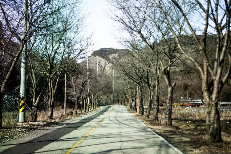 Bare Tree Calm Camden Maine Beautiful Mountaintop Cold Jinan LINE MaisAntiga 👭💖 No People Road Tranquility Winter