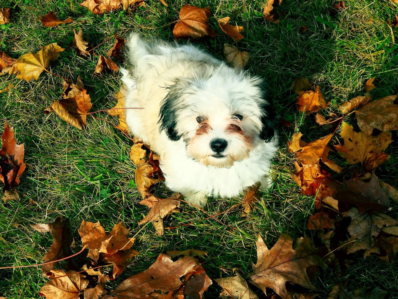 Creative Light And Shadow Puppy Adorable Nature Lover Who Me? Too Cute My Pet EyeEm Nature Lover Pet Portrait Playing In The Leaves TakeoverContrast
