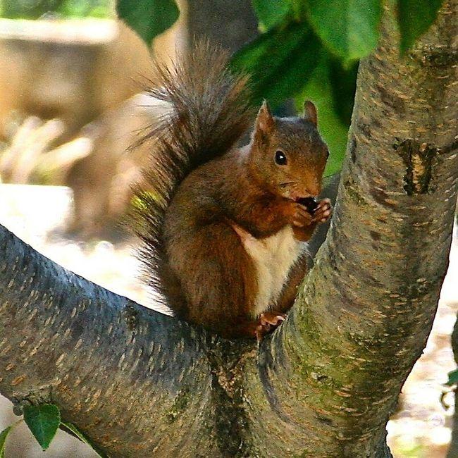 My Pets :) David le petit écureuil