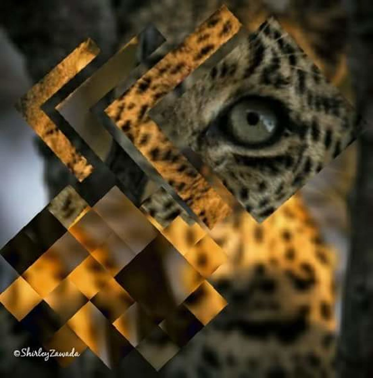 No People Close-up Animal Themes Surreal Tiger Eye IMography Mobileartistry Digital Art