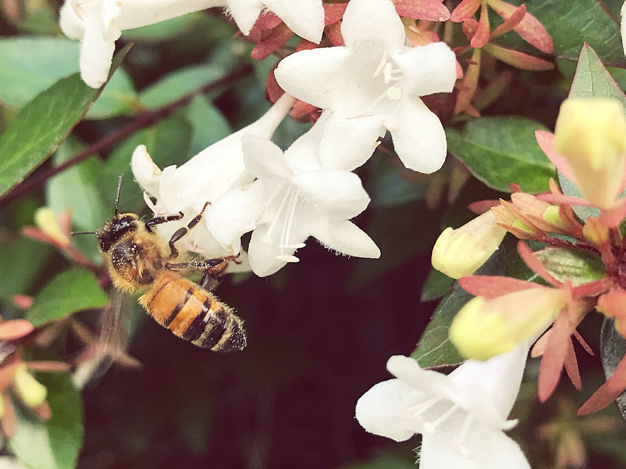 insect, flower, animal themes, one animal, white color, animals in the wild, fragility, growth, nature, petal, plant, day, no people, close-up, flower head, beauty in nature, focus on foreground, outdoors, leaf, freshness