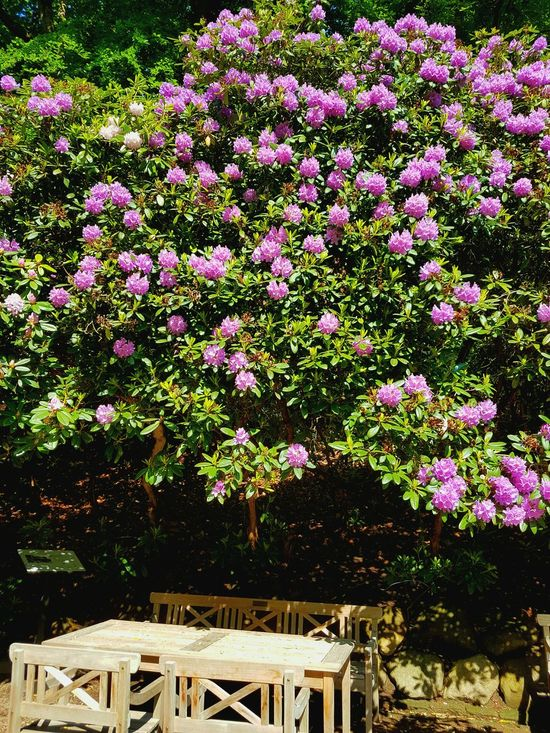 Photography Beauty In Nature Helsingborg Sweden Royal Palace OldCastle Crownprince Crownprincess Beautiful Place Sweden Nature Tree Flowers,Plants & Garden 1864 - 1905 Summer2016
