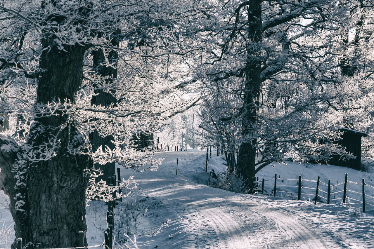 Beauty In Nature Branch Cold Temperature Day Drastic Edit Exceptional Photographs EyeEm Best Edits Finding New Frontiers Winter Wonderland Forest Frost Frosty Hello World Idyllic Landscape Light And Shadow Nature No People Outdoors Snow The Way Forward Tranquil Scene Tranquility Tree Winter
