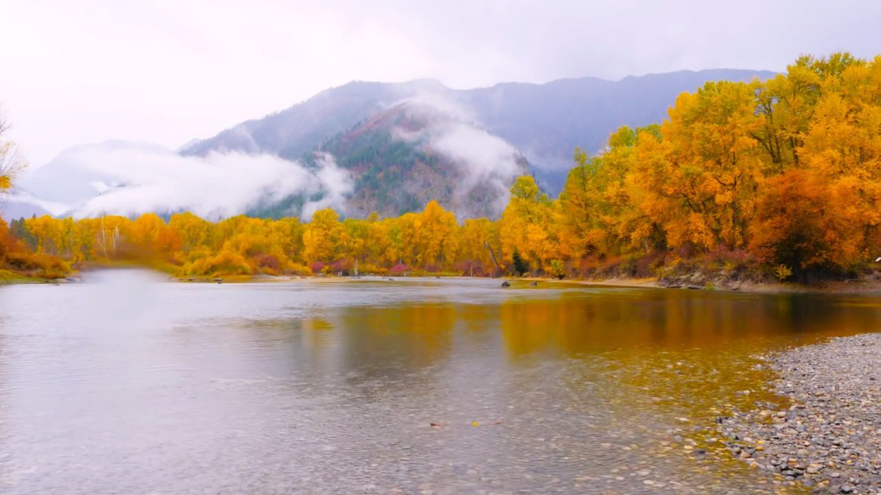 Autumn Fog Forest Tree Landscape Nature Reflection Leaf Scenics Lake Mountain Morning Outdoors Change Yellow Beauty In Nature No People Day Sky