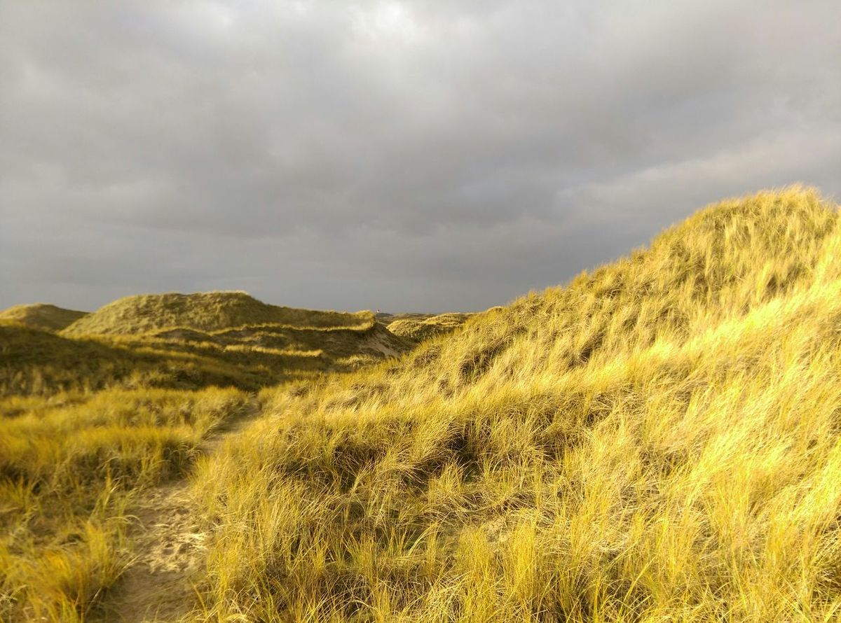 Glowing Dunes Autumn Colors