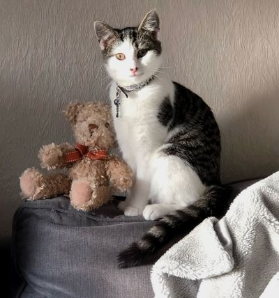 Domestic Cat Pets Indoors  Sitting No People Domestic Animals Feline Looking At Camera Portrait Mammal Animal Themes Day