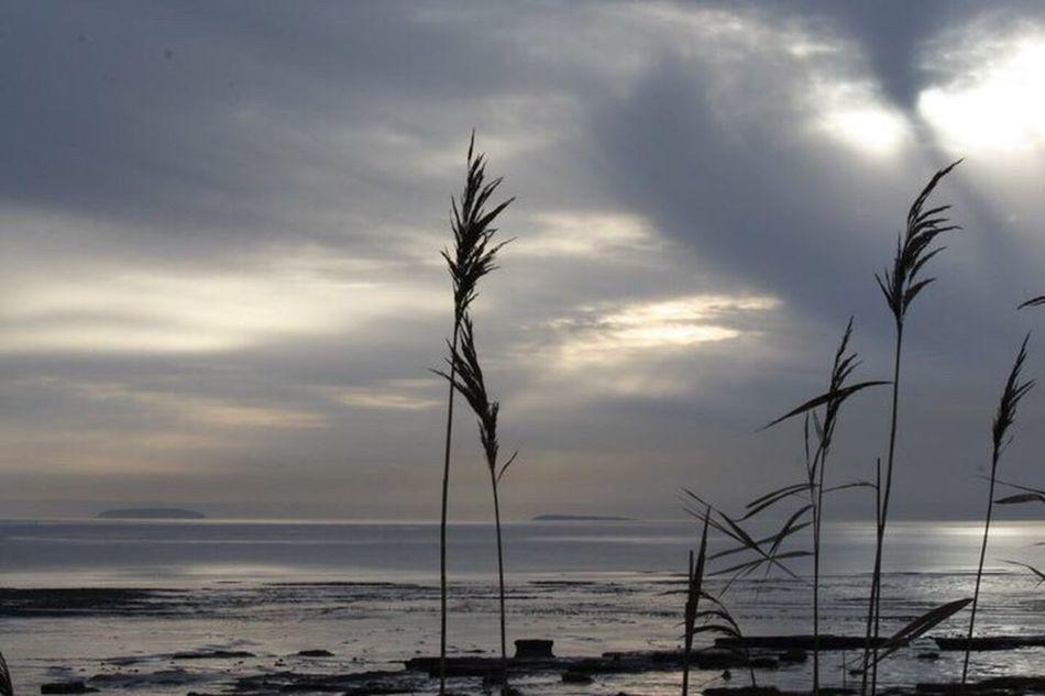 Sea Newport Wetlands WetLandsTrust