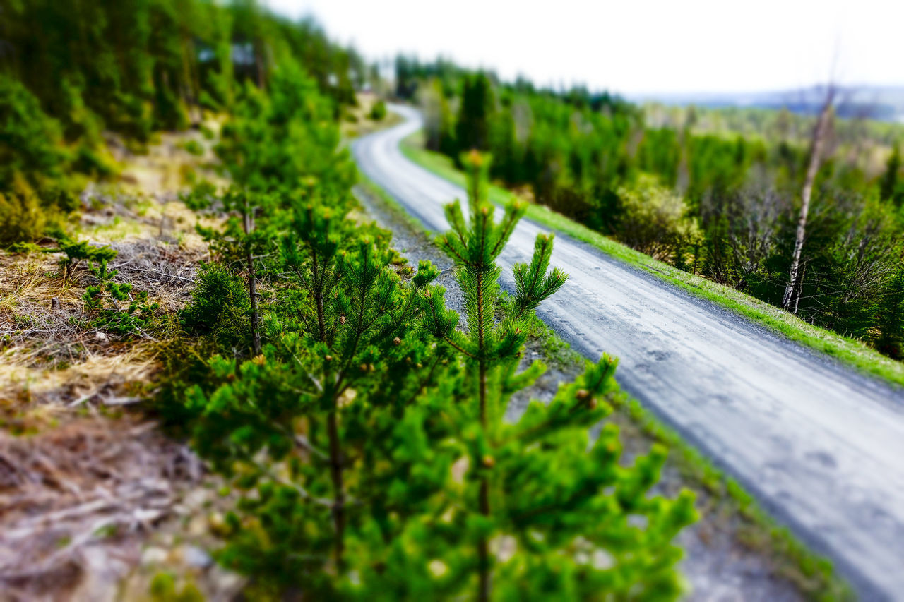 Road Nature Green Color Outdoors Beauty In Nature Miniatureeffect Sweden Forest Landscape Landscape_photography Landscapes Landscape Photography Landscape_lovers Planet Earth Nature Forest Trees Trees And Nature Green Color Forestphotography Tree Area Close-up The Way Forward