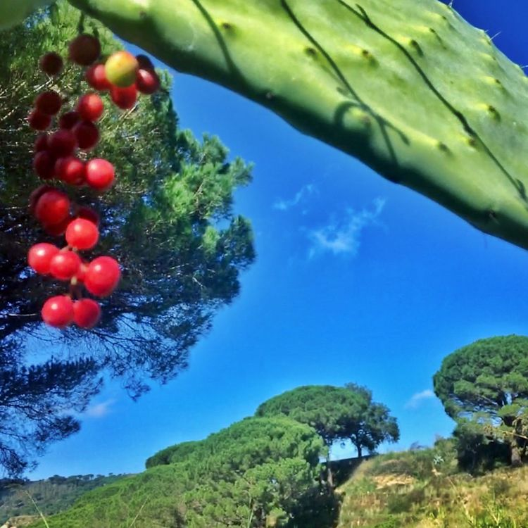 Sicily Green Color Nature Travel Destinations Colors Autumninsicily Tree Day Growth Food And Drink Fruit Beauty In Nature Outdoors No People Sky Healthy Eating Low Angle View Freshness Food Branch Close-up