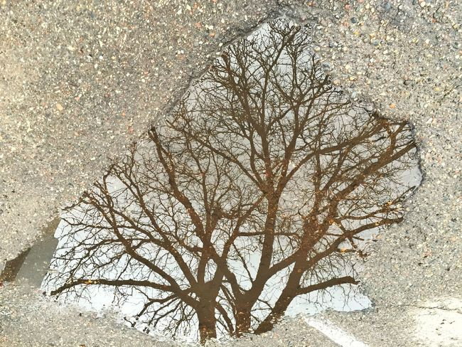Potholes Puddleography Puddle Reflections Reflection Reflections Reflection_collection Water Reflection Tree_collection