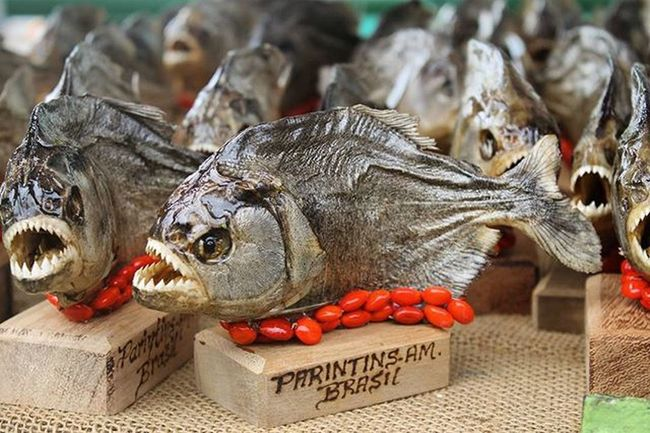 """Saca essas """"marmotas"""" Parintins Piranhas Lembraças"""
