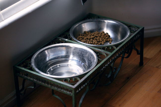 Aluminium Animal Themes Bowl Dog Dog Food Dry Food Food And Drink Home Indoors  Kibble Metal Natural Light No People Pet Owner Silver  Water Window Light