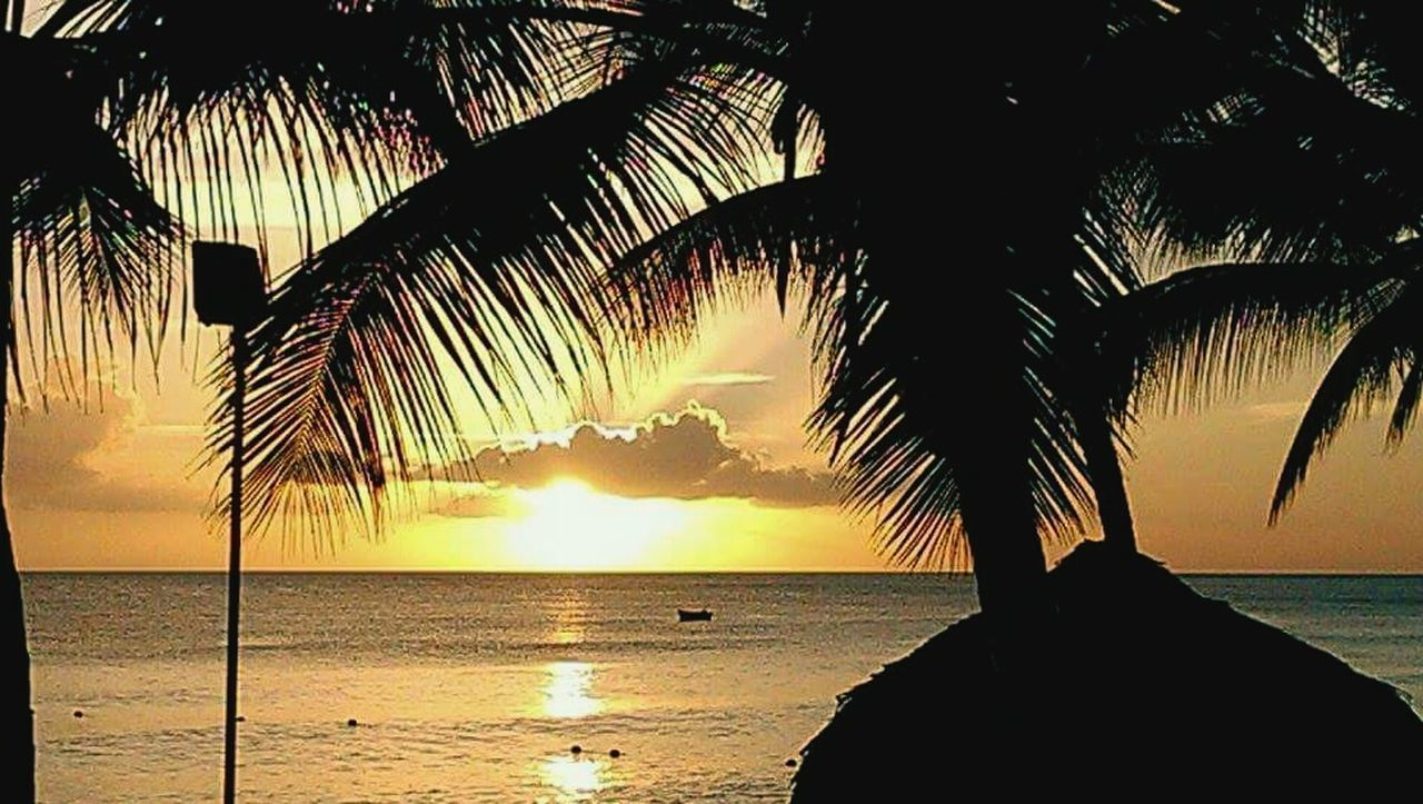 palm tree, sea, sunset, water, silhouette, scenics, beauty in nature, beach, nature, horizon over water, tree, tranquil scene, tranquility, sky, idyllic, outdoors, tree trunk, no people, day