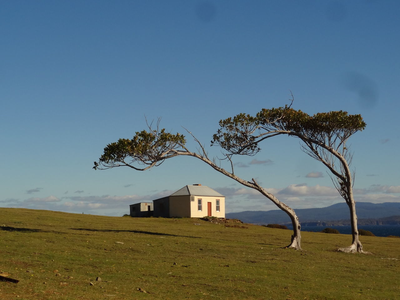 A lonely house on Maria Island, Tasmania. The wind caused the trees to bend over, causing a photogenic sight. Adventure Australia Beach Beauty In Nature Blue Clear Sky Colonial Architecture Day Grass Historical Building History Island Landscape Lonely Natural Nature Nature Photography No People Outdoors Sea Sky Solitude Tasmania Time Tree