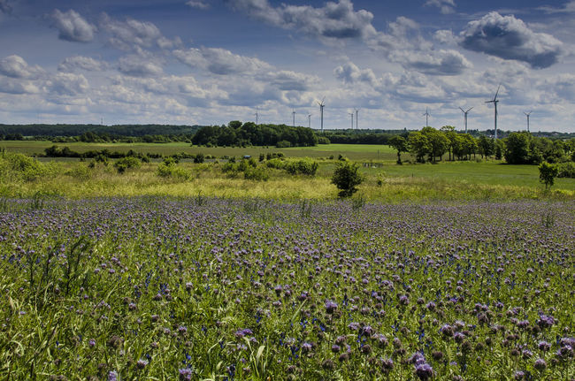Beauty In Nature Cloud - Sky Cloudy Cultivated Land Energy Plant Field Flower Freshness Landscape No People Sky Windmill