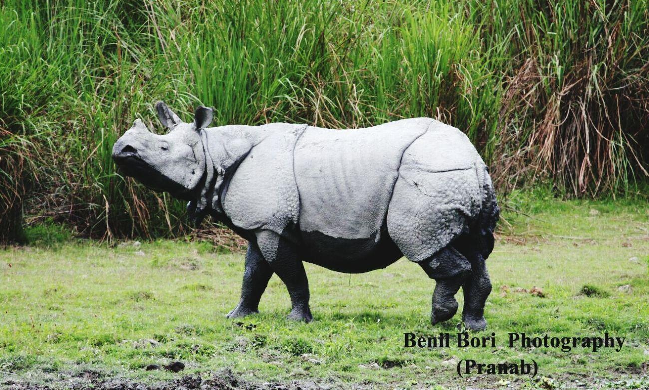 One horn rhino First Eyeem Photo