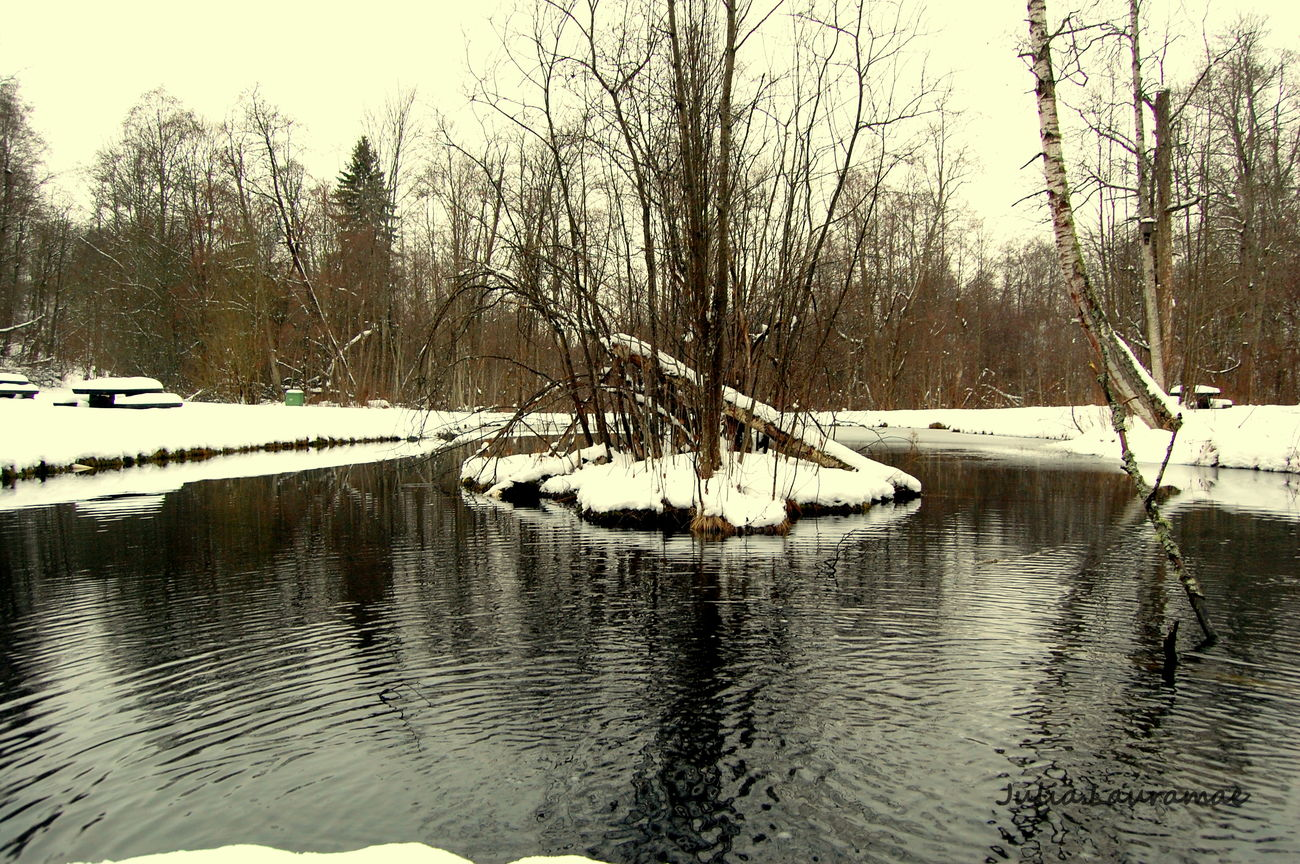 EyeEm Nature Lover Water Reflections Trees Winter
