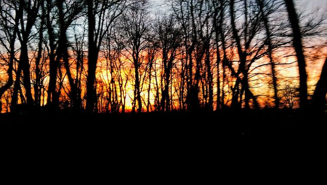 Hoosier Farmland Sunset Sun And Trees