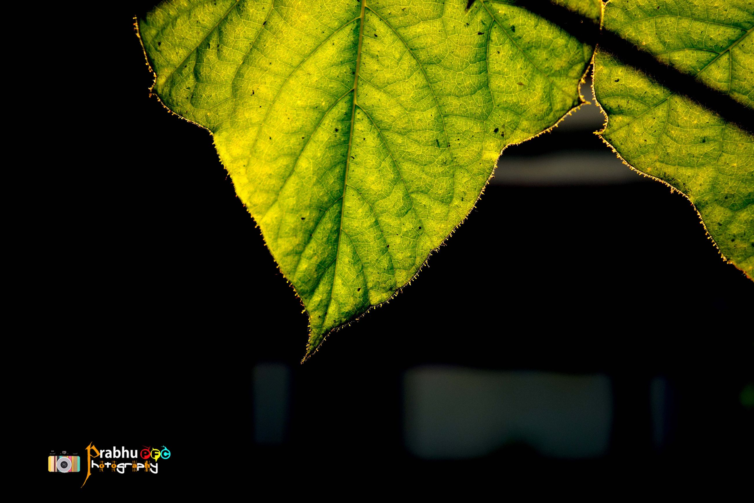leaf, close-up, low angle view, tree, branch, green color, growth, focus on foreground, night, built structure, outdoors, religion, nature, no people, building exterior, architecture, plant, hanging, spirituality