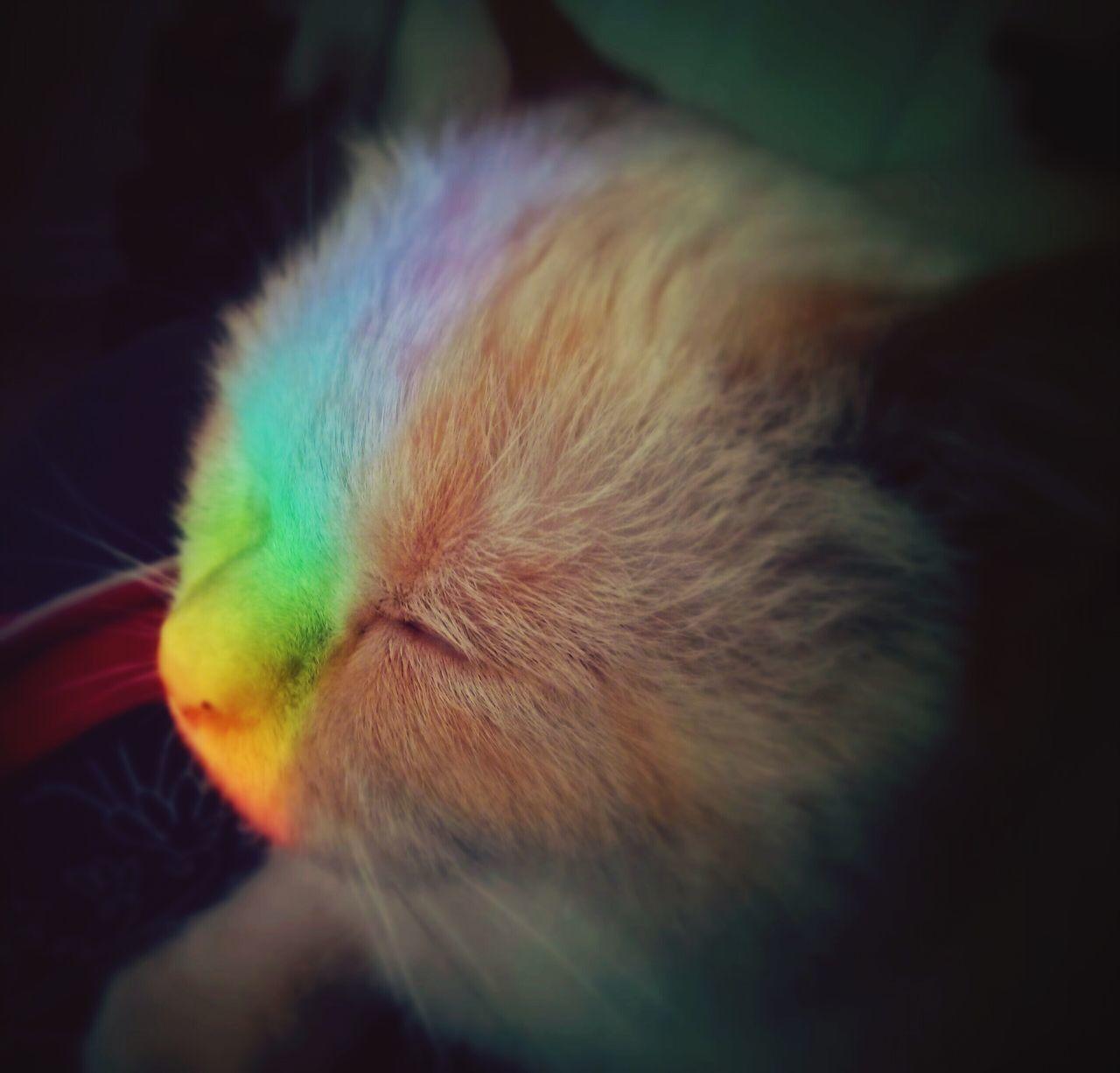 Someone has a Rainbow nose! Cute Pets Eye Em Best Shots Cute Cats