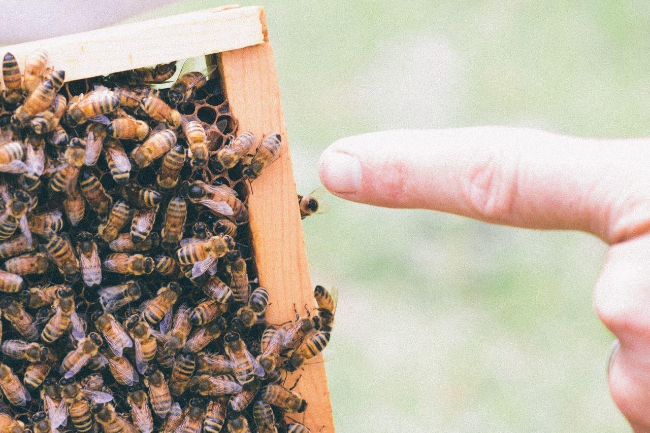 Beautiful stock photos of bee, Animal Themes, Bee, Close-Up, Colony