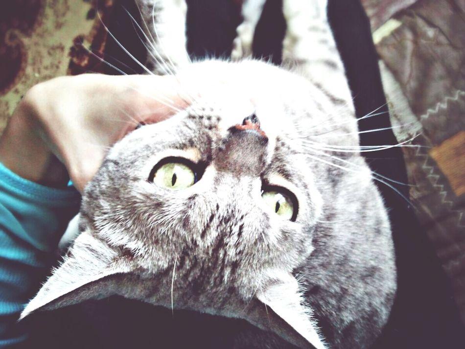 Джулиус Cat Watching