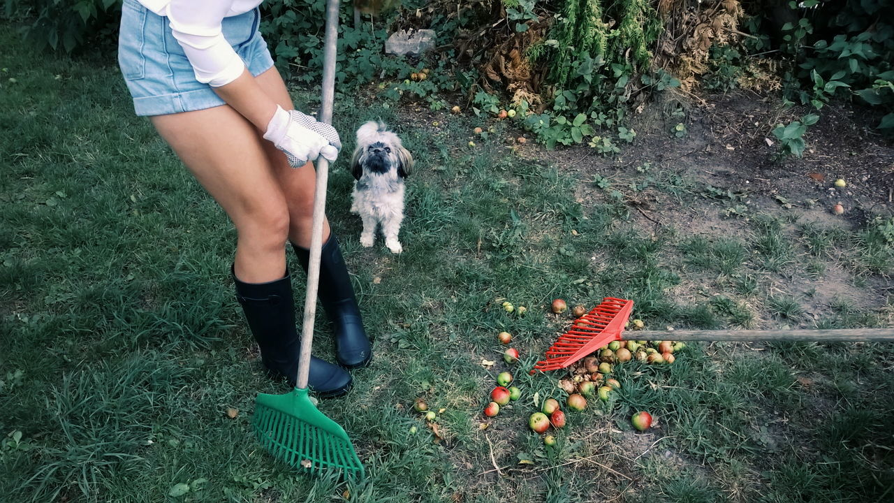 gardener Young Women Pet Gardener Gardeningtime Dog Best Friends Legs Part Of Body Unrecognizable Person Autumn Fall Harvest Gardening Two Is Better Than One Live For The Story