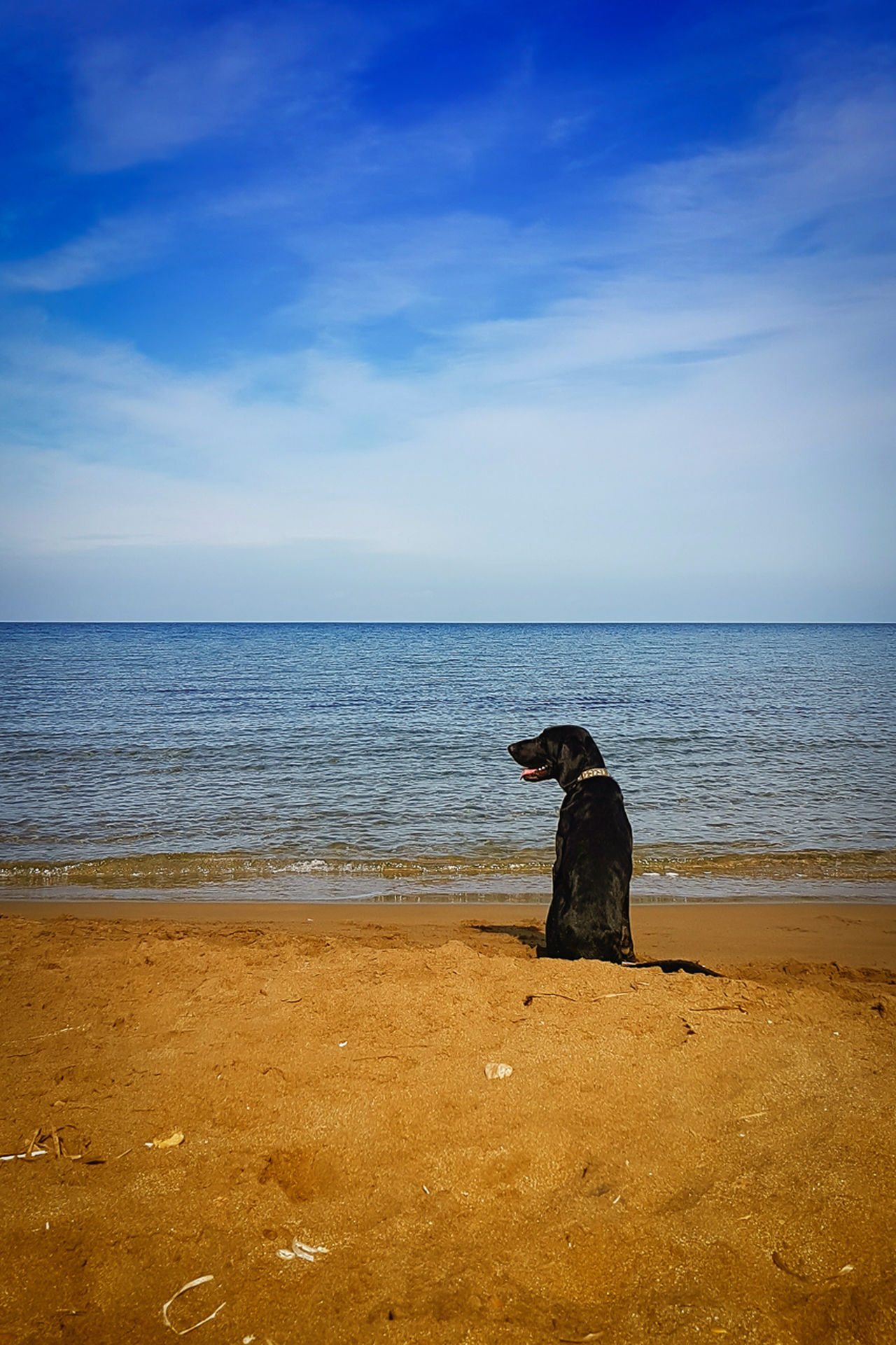 Dog on beach Beach Beauty In Nature Cloud - Sky Dog Horizon Over Water One Animal Outdoors Pet Sand Scenics Sea Sea And Sky Sky Water