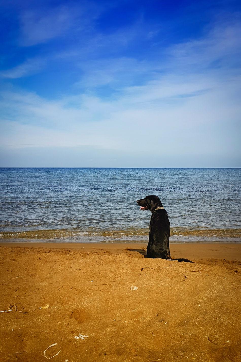 Dog on beach Beach Beauty In Nature Cloud - Sky Dog Horizon Over Water One Animal Outdoors Pet Sand Scenics Sea Sea And Sky Sky Water