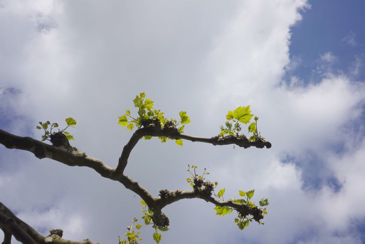 Low Angle View Nature Tree Sky Branch Growth Day Outdoors Beauty In Nature Cloud - Sky No People Flower Fragility Freshness