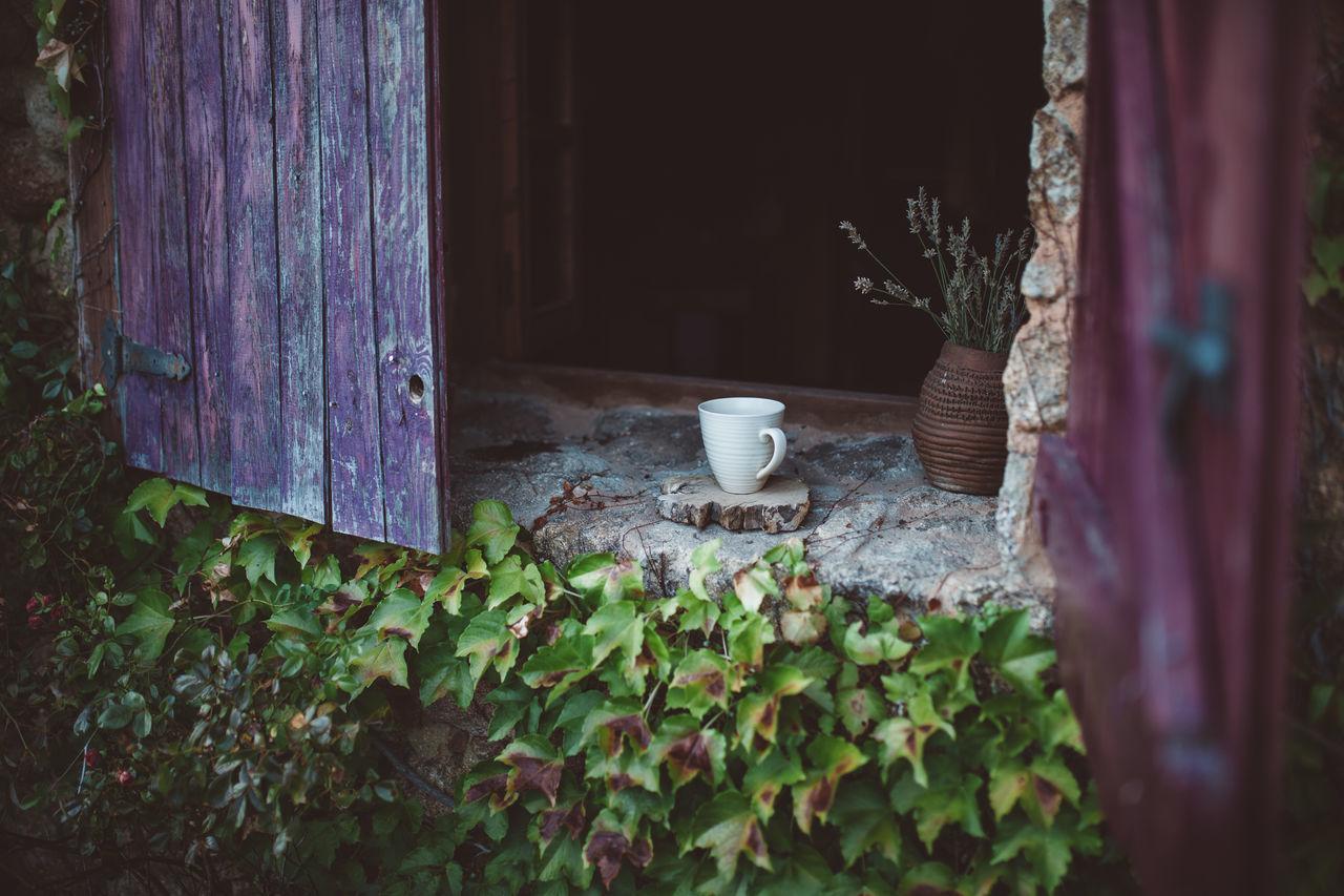 Cup Of Tea Cute Day Flower Freshness Growth Indoors  Lavanda Leaf Lock Nature No People Plant Tea Tea Time Window Wood Wood - Material