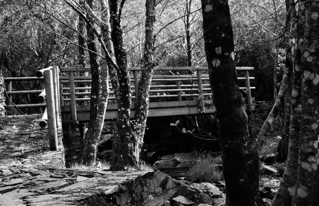 The bridge to the forest Beauty In Nature Black And White Blackandwhite Bridge Day Eye4photography  EyeEm Nature Lover Forest Landscape Nature Nature Nature Photography Nature_collection Photo Photography Rocks And Water Shadows Tree Trees Water
