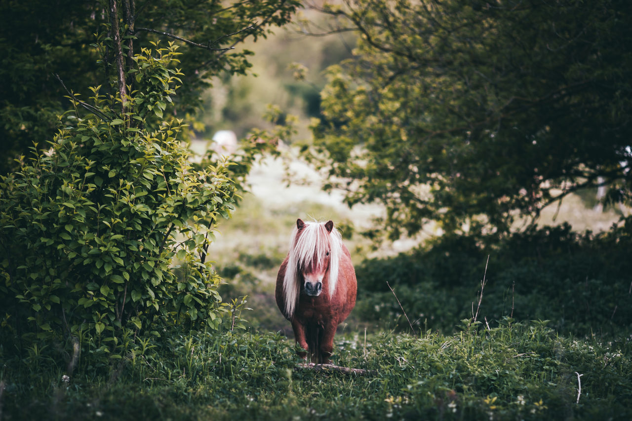 Beautiful stock photos of pony, Animal Themes, Day, Domestic Animals, Field