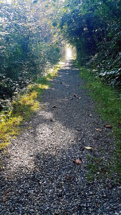 Full Frame Day The Way Forward Nature Outdoors Tranquil Scene Remote Scenics Beauty In Nature Park Surface Level Multi Colored No People Tranquility Green Color Beauty In Nature Forest Lichtblick Ray Of Hope Morning Sunbeam Way Weg Waldspaziergang Forestwalk