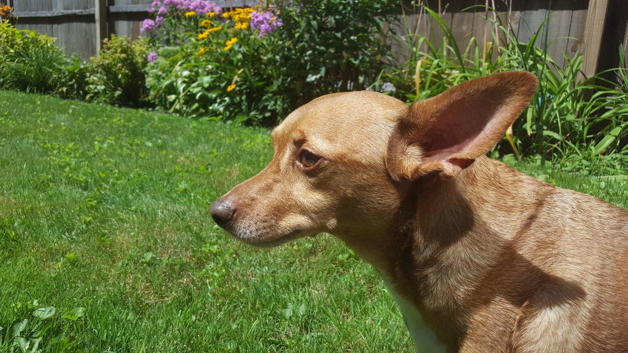 Animal Themes Close-up Dog Dog In Backyard Dog Portrait Domestic Animals No Filter No Edit One Animal Pets